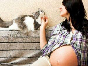 gatos en el embarazo